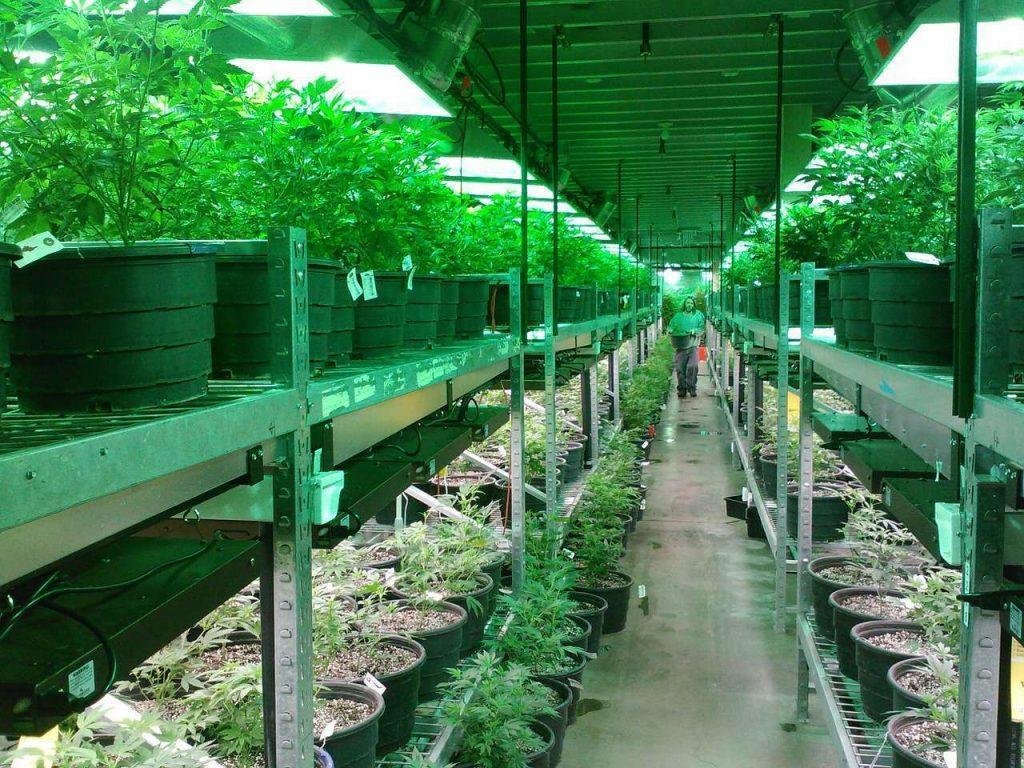 Marijuana Legal States - Dr. Weedy