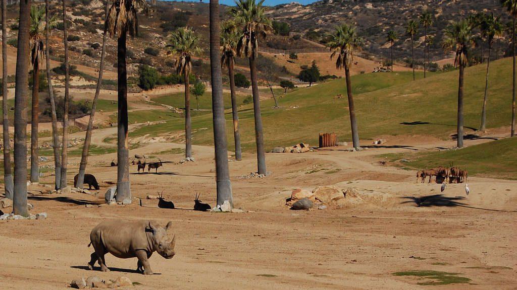 Safari Park in San Diego, California