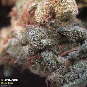 Medical Cannabis Strain in San Jose (CA)