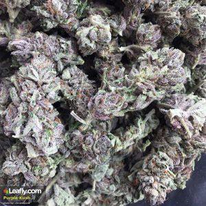 Purple Kush in Los Angeles