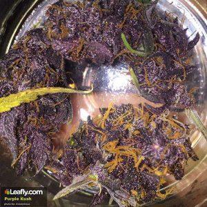 Purple Kush - Los Angeles, California