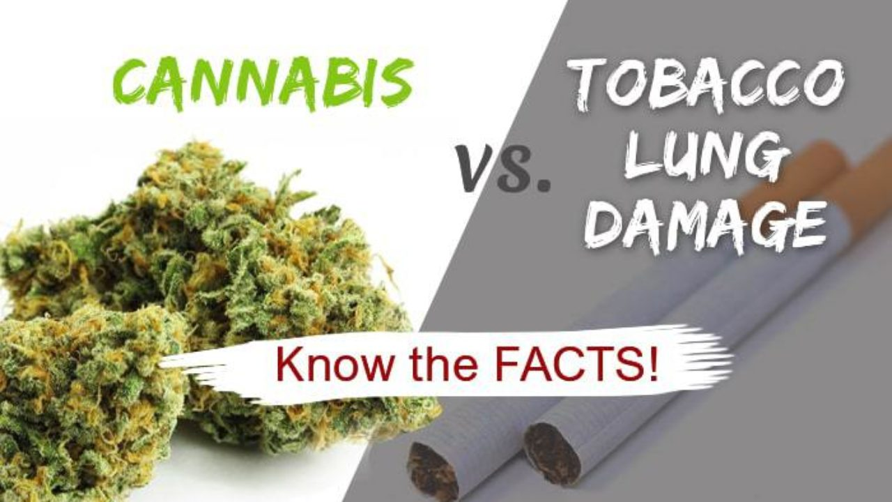 Lung health marijuana vs cigarettes know the facts