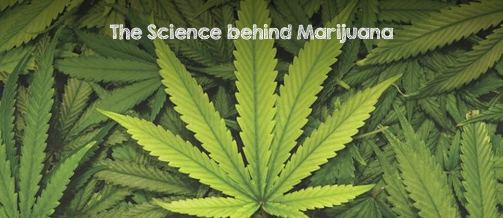 science behind marijuana