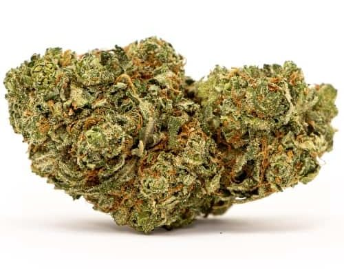 otto cbd strain