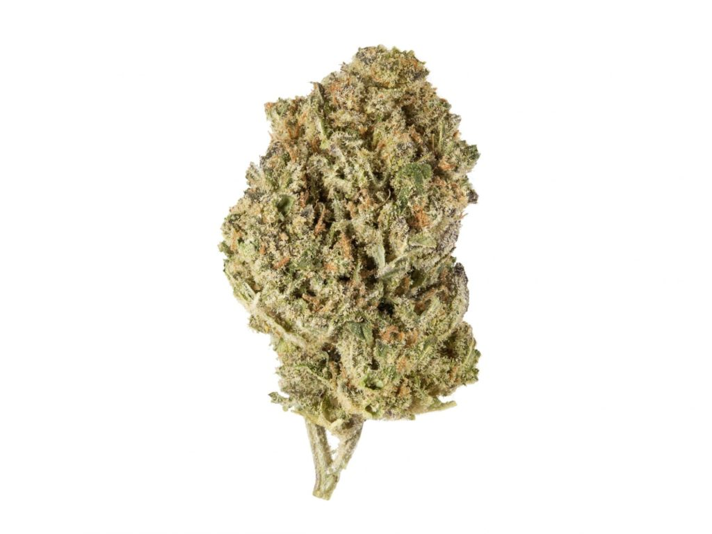 Harlequin cbd strain