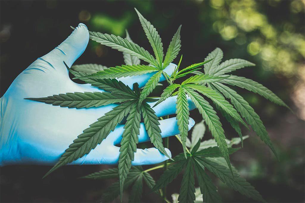 marijuana on hand