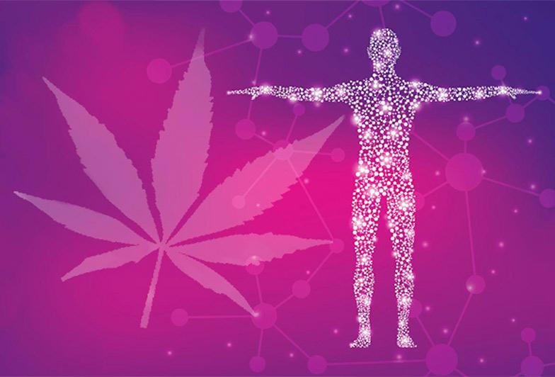 Endocannabinoid System & Cannabis