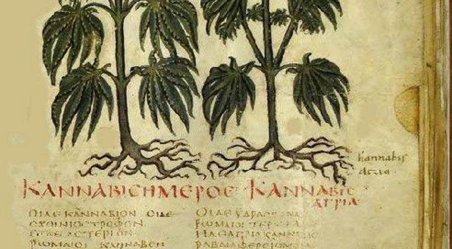 Cannabis in Medieval history
