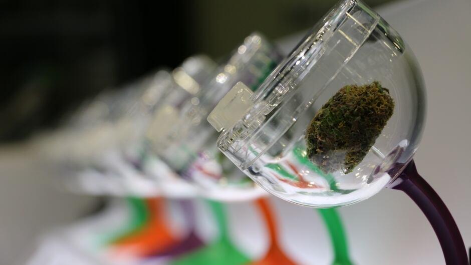 Cannabis's future.