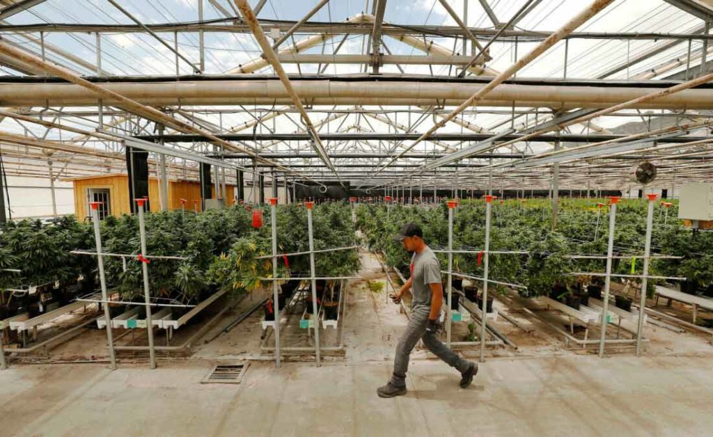 California marijuana business