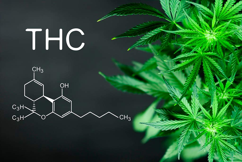 THC And Adverse Health Effects