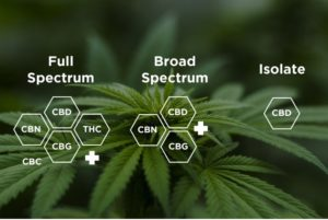 Choosing Between CBD Isolate, Broad And Full Spectrum