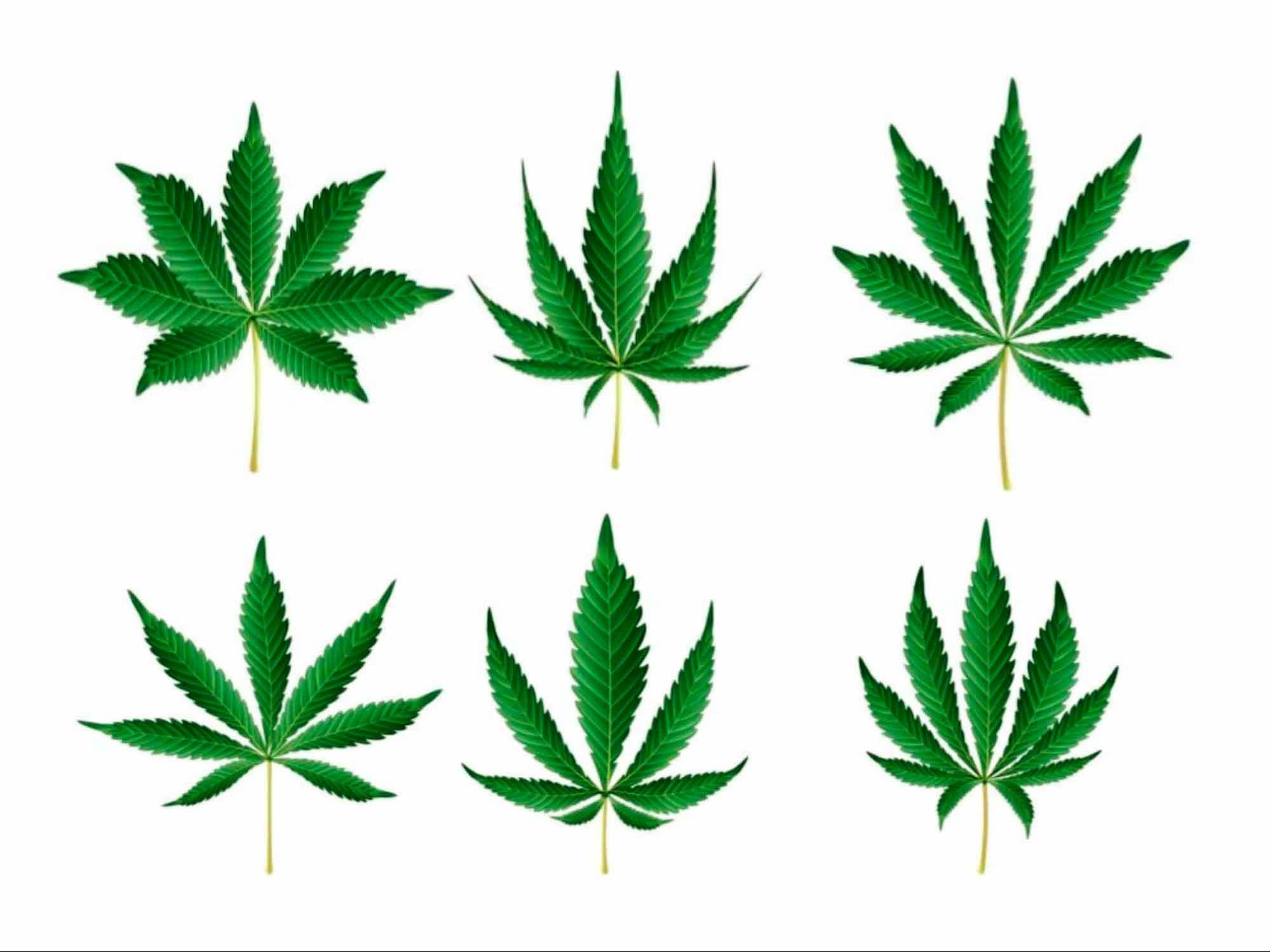 cannabis strain names